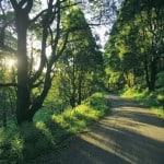 Grand Ridge Road