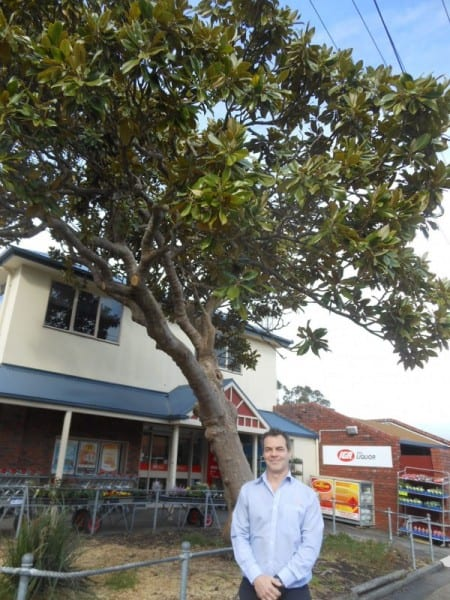 • Store manager Paul Brown under the Southern Magnolia at the front of Foster's IGA supermarket.